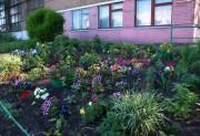 Сотворили цветочное чудо