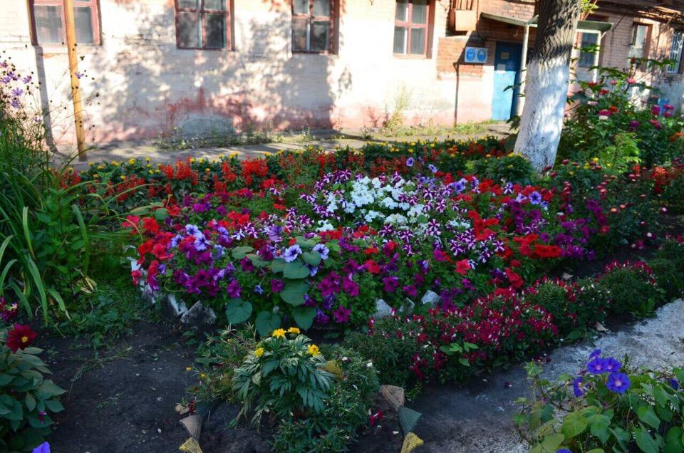 Все лето яркие бутоны, живые изгороди из зелени, аккуратные газоны радовали работников «ММК-МЕТИЗ»